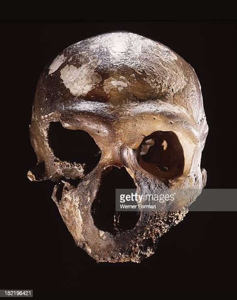 Neanderthal skull Damage to the base of the skull was previously interpreted as evidence of cannibalism but is now understood to have been caused by...