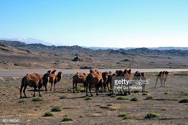 Near Turpan Xinjiang China