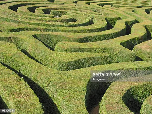 Neatly clipped swirling Hedge Maze in the sunshine