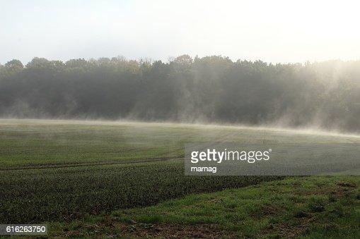 Nebel : Stock Photo