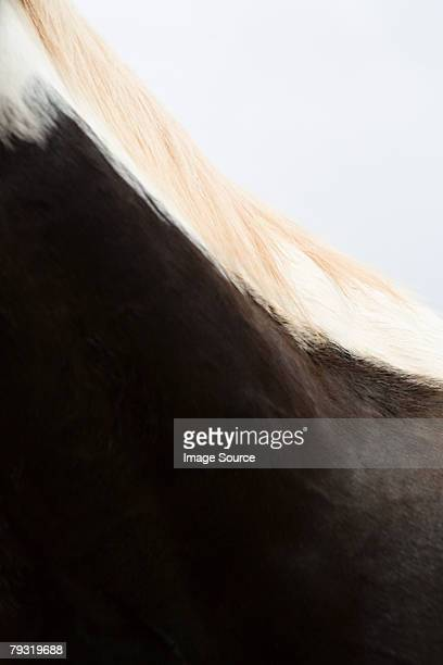 Neck of a horse