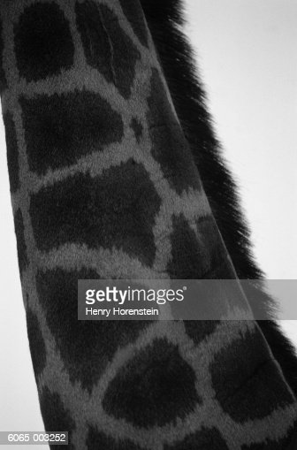 Neck of Giraffe : Bildbanksbilder