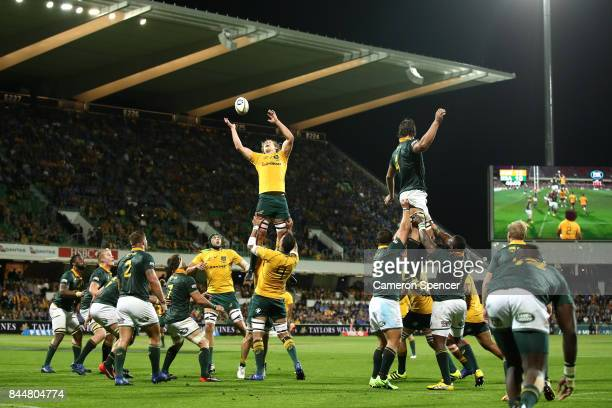 Ned Hanigan of the Wallabies takes a lineout ball during The Rugby Championship match between the Australian Wallabies and the South Africa...