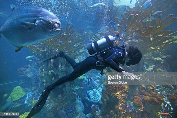 Needham High graduate Sunita Suni L Williams swims in the Big Tank at the New England Aquarium on Jul 9 2015 Williams has been an astronaut with NASA...