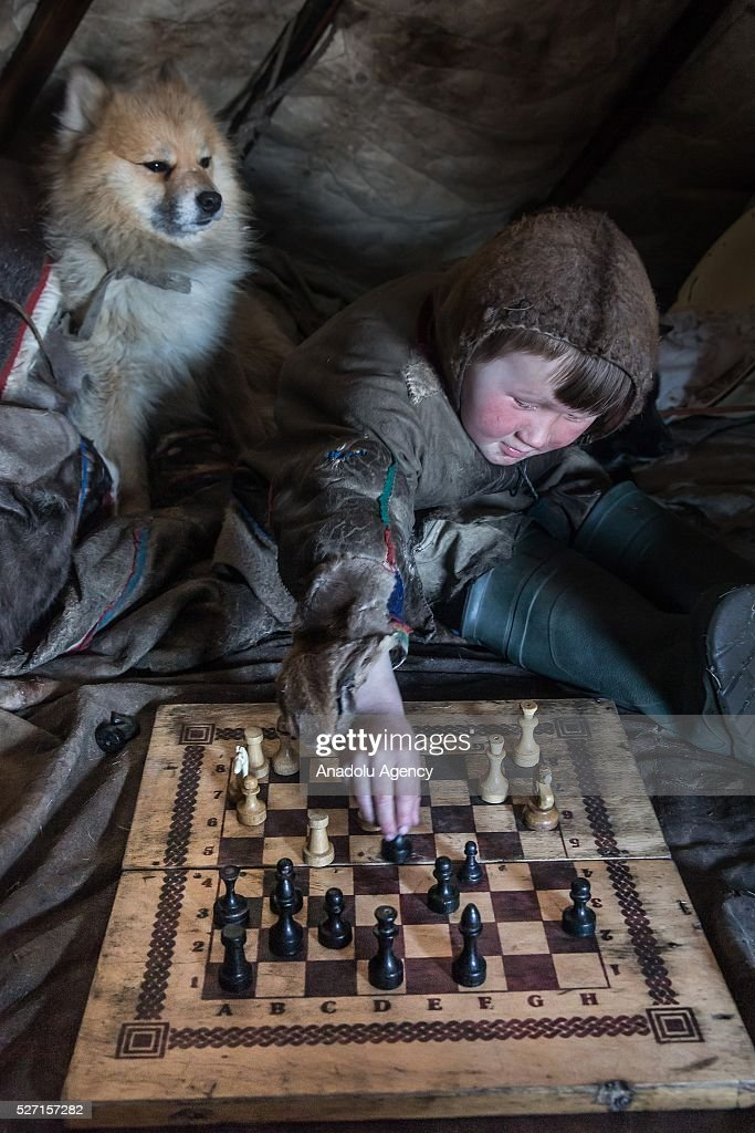 A Nenet kid plays chess as his animal is seen next to him in his shelter at 150 km from the town of Salekhard, Yamalo-Nenets Autonomous Okrug in Russia on May 2, 2016.
