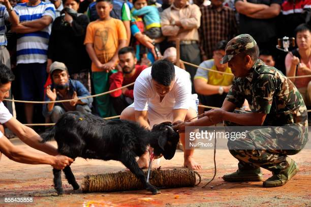 A Nepalese devotees slaughter a goat on the occasion of Navami ninth day of Dashain Festival at Basantapur Durbar Square Kathmandu Nepal on Friday...