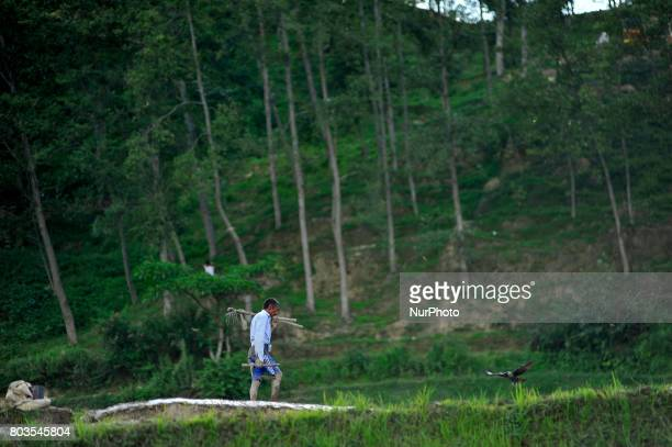 Nepalese farmer arrives to plowing paddy field for the rice plantation during the celebration of National Paddy Day quotASHAD 15quot at Chhampi Patan...