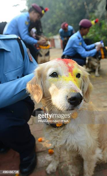 A Nepalese police dog handler garlands a dog with marigolds and vermillion powder during a ceremony offering blessings to police dogs to mark the...