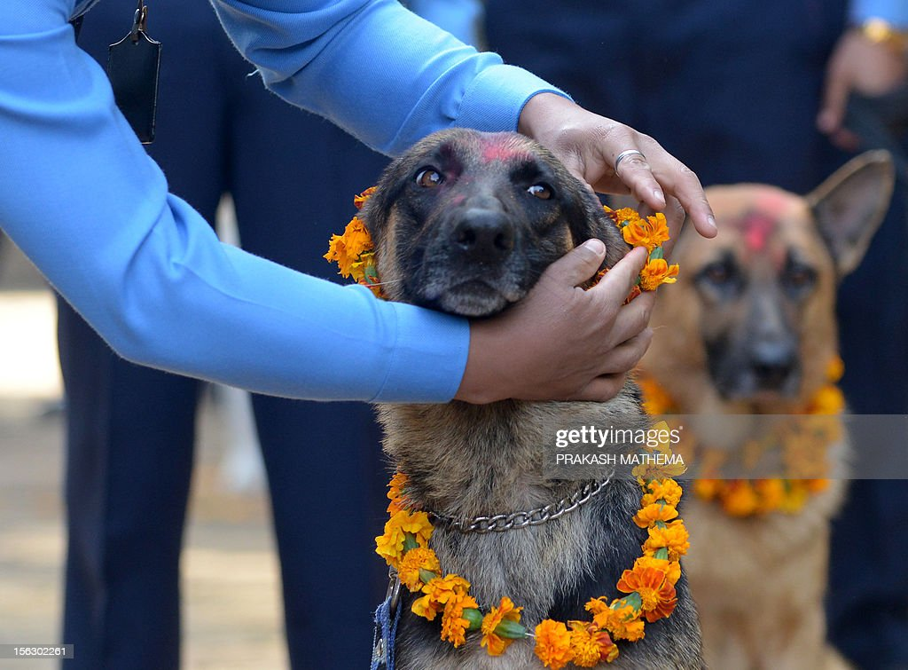 Nepalese police officers garland their dogs after applying vermillion to their foreheads on the occasion of the Tihar festival in Kathmandu on November 13, 2012. On Tihar, as the Hindu festival of Diwali is locally known, it is customary in Nepal for people offer blessings to dogs, which are according to Hindu tradition, the messengers of Yamaraj, the god of death. AFP PHOTO/ Prakash MATHEMA