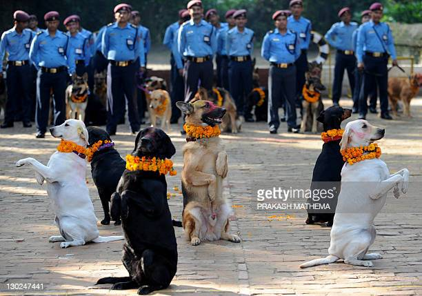 Nepalese policemen pose with their dogs after applying vermillion to their foreheads and placing marigold garlands around their necks on Tihar...
