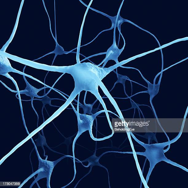 Nerve Cells XL+