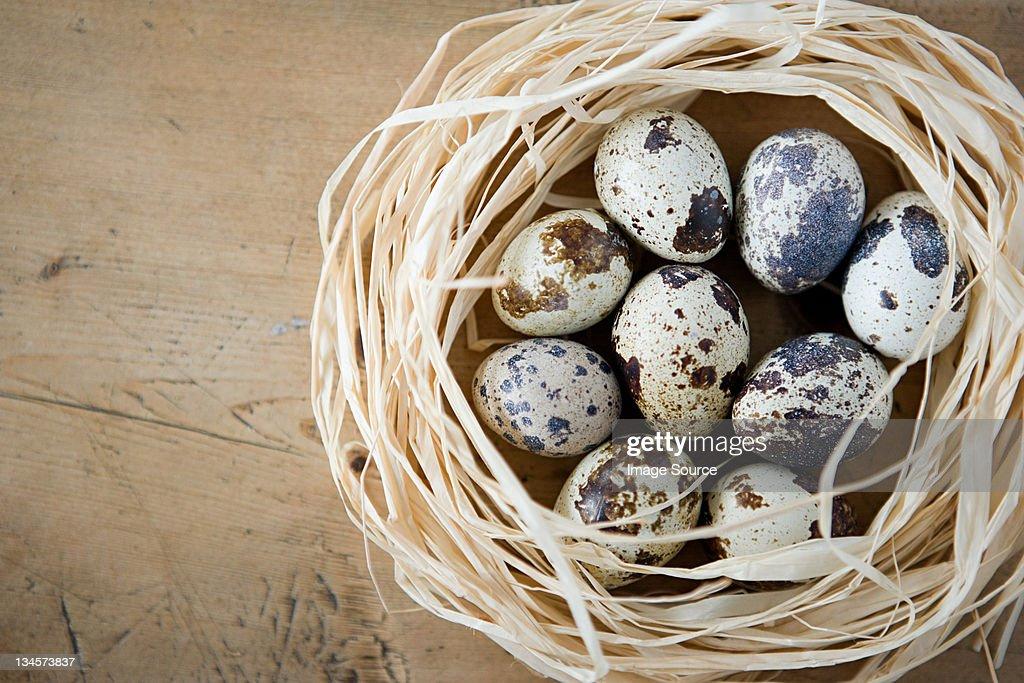 A nest of quails eggs