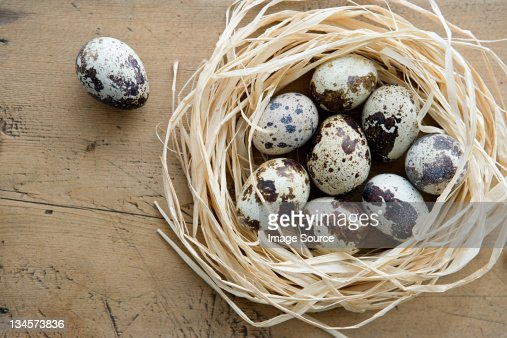 A nest of quails eggs with one alone : Stockfoto