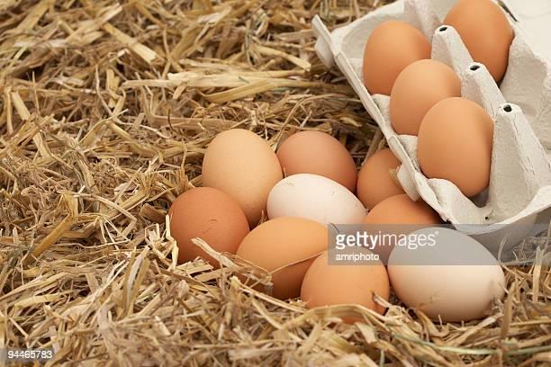 nest mit Eiern und box