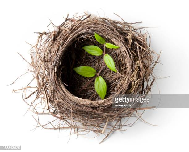 Nest with green twig