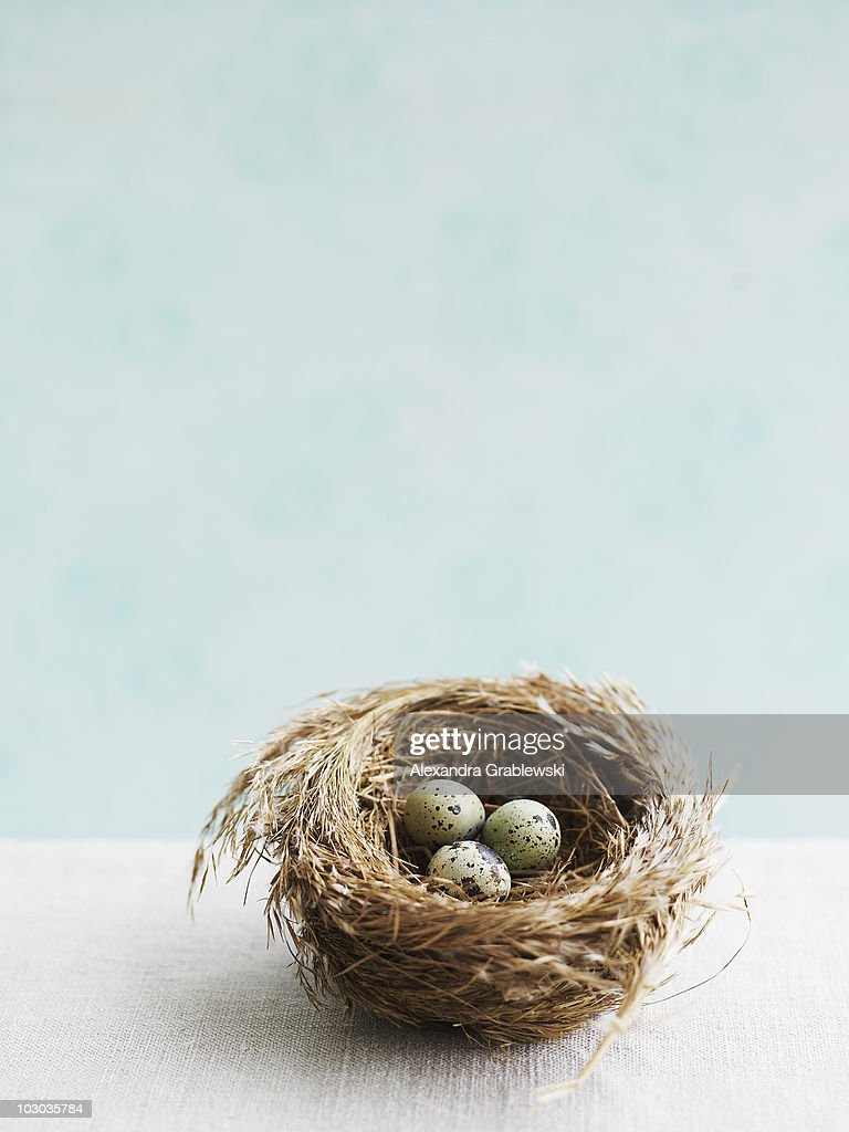 Nest with Small Eggs