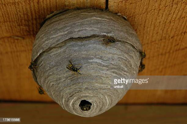 nesting insects
