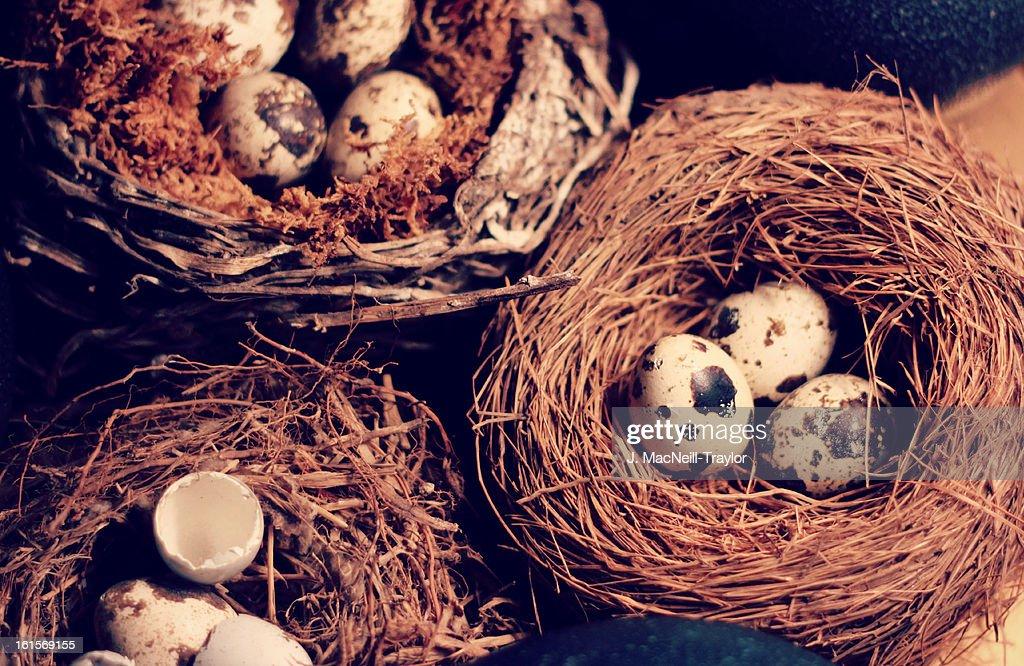 nests : Stock Photo