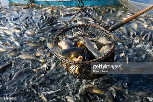 Netto von Fische