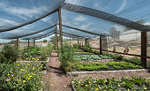 Panoramic view of a working greenhouse in Mexico