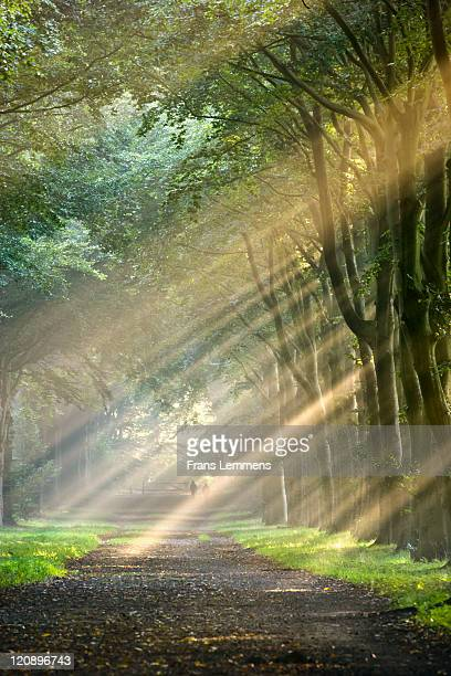 Netherlands, Beech forest road, morning mist