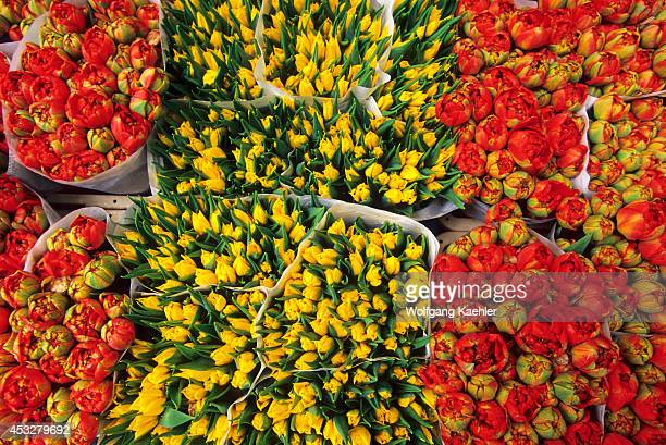 Netherlands Holland Amsterdam Flower Market Close Up Of Tulips
