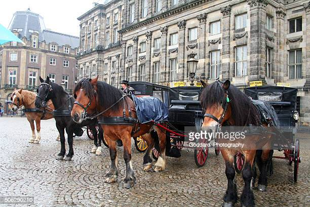Netherlands: Horse and Carriages in Amsterdam
