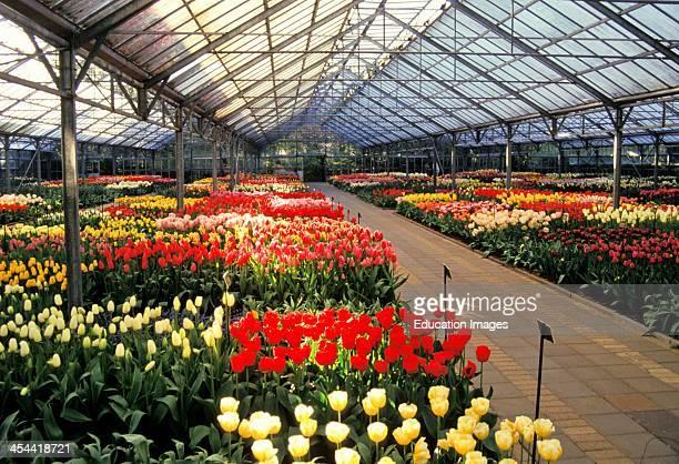 Netherlands Keukenhof Garden Large Greenhouse With Tulips