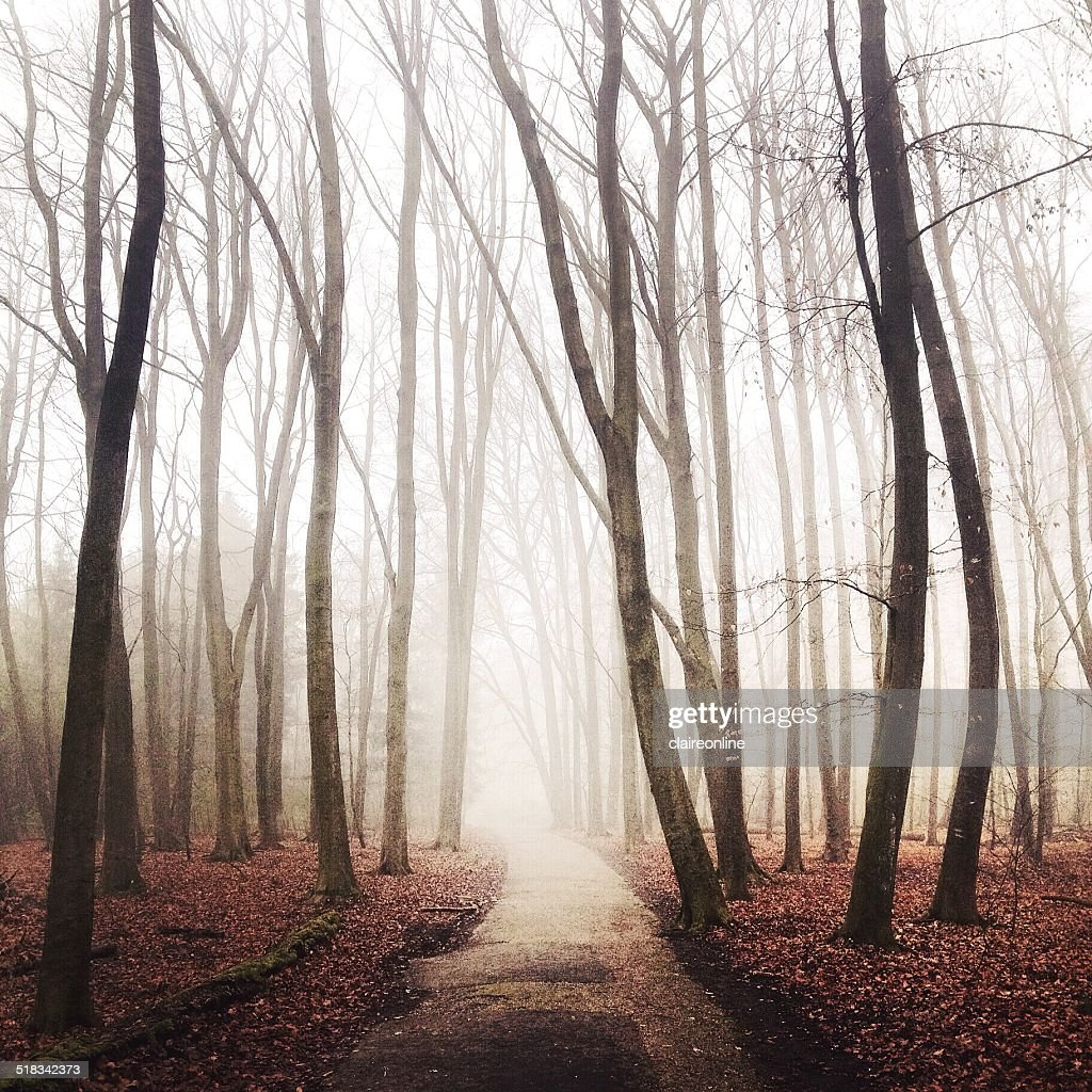 Netherlands, Kralingse Bos, Footpath leading into foggy leafless forest