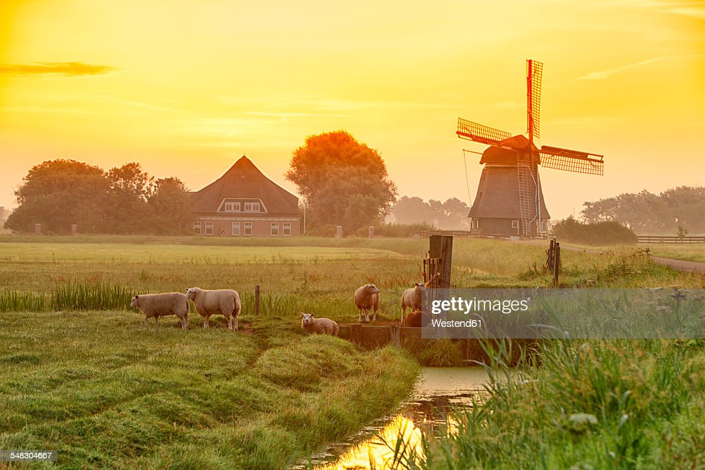 Netherlands, North Holland, windmill at sunset