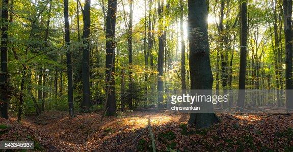 Netherlands, Overijssel, Twente, Enschede, Sunlit forest