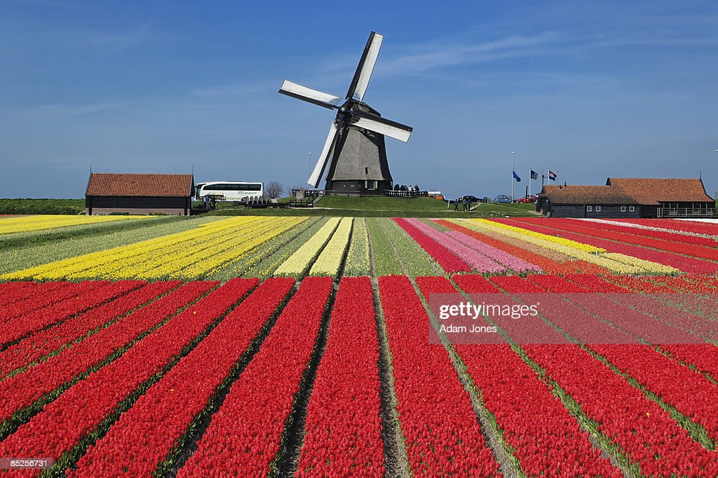 Netherlands : Stock Photo