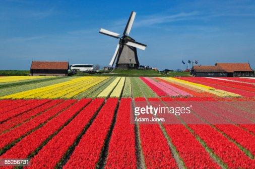 Netherlands : Stockfoto