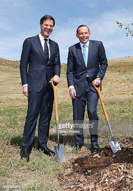 Netherlands Prime Minister Mark Rutte and Australian Prime Minister Tony Abbott pose for media while planting a silver birch tree at the National...