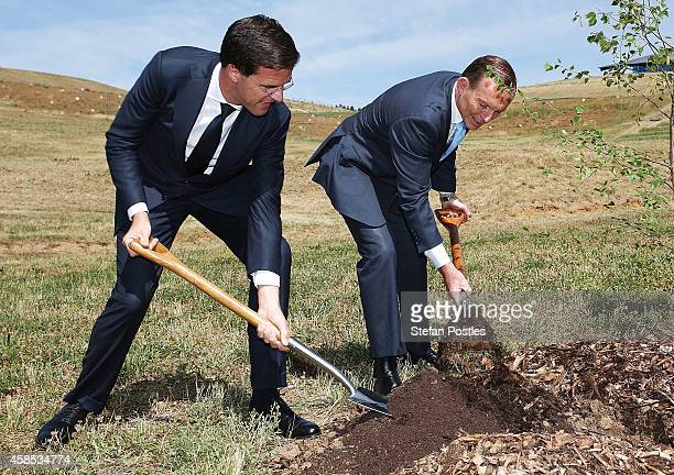 Netherlands Prime Minister Mark Rutte and Australian Prime Minister Tony Abbott plant a silver birch tree at the National Arboretum on November 7...