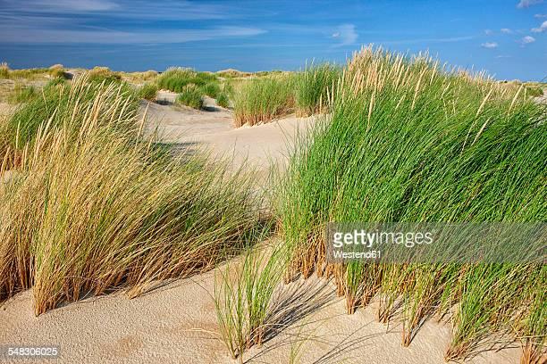 Netherlands, Texel Island, Dunes of Texel National Park