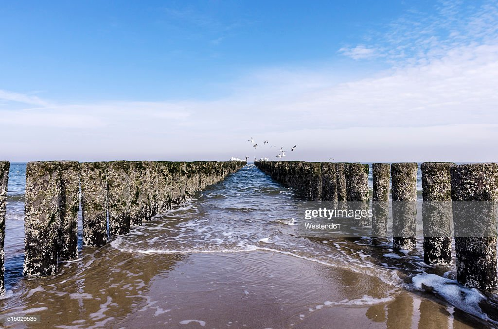 Netherlands, Zeeland, Domburg, Beach with breakwaters and seagulls