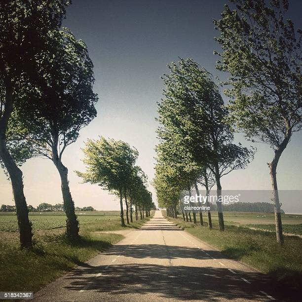 Netherlands, Zeeland, View along country road