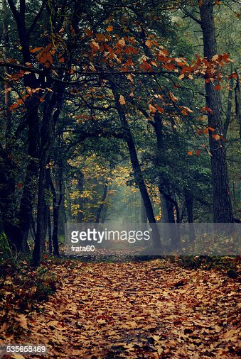 Nethrlands, View along footpath in forest covered with fallen leaves