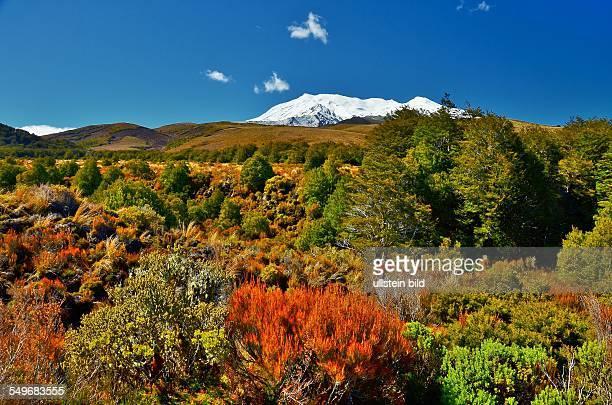 Neuseeland schneebedeckte Gipfel hinter farbenpraechtiger Flora im TongariroNationalpark Der Nationalpark mit seinen aktiven Vulkanen ist der vierte...