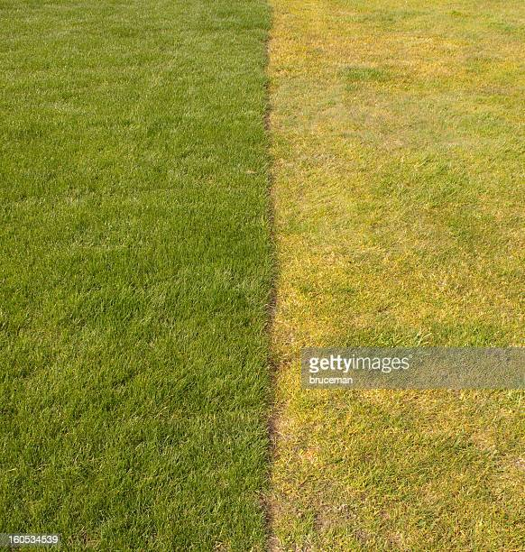 New and Old Grass