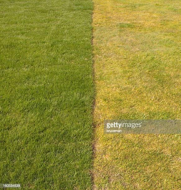 Nouveau et ancien herbe