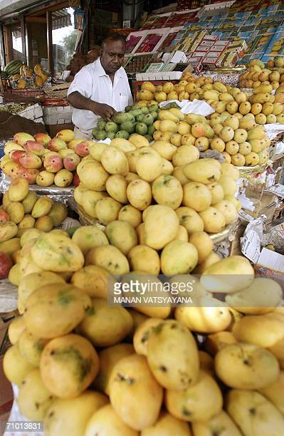 TO GO WITH 'INDIATRADEEXPORTSMANGO' An Indian fruit seller arranges his mangoes at his shop in New Delhi 20 May 2006 India the world's largest...