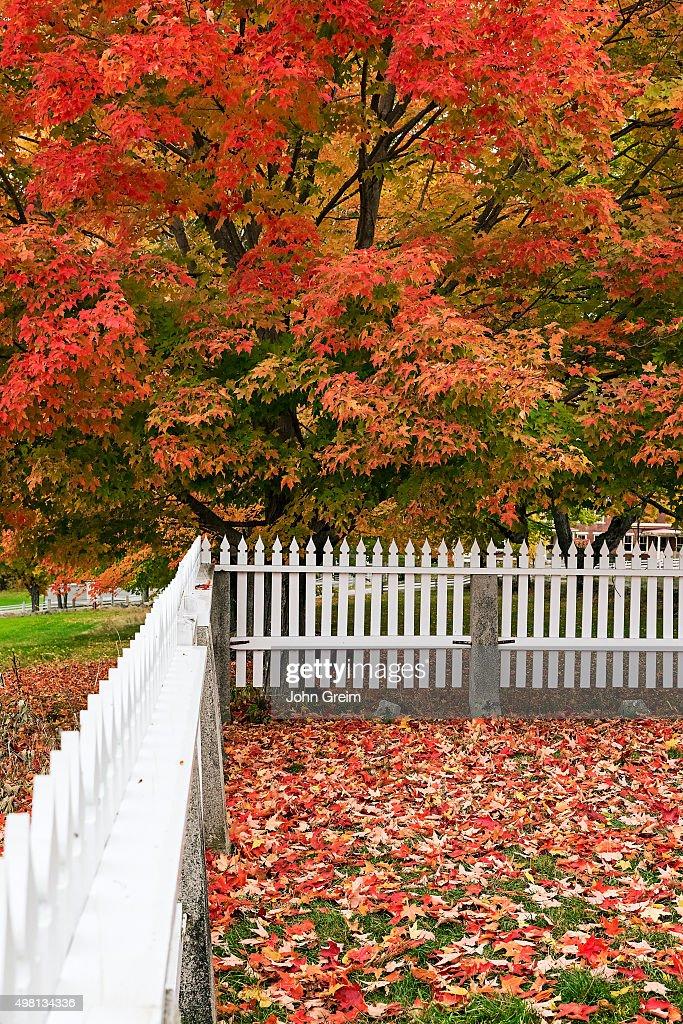 New England autumn scenic