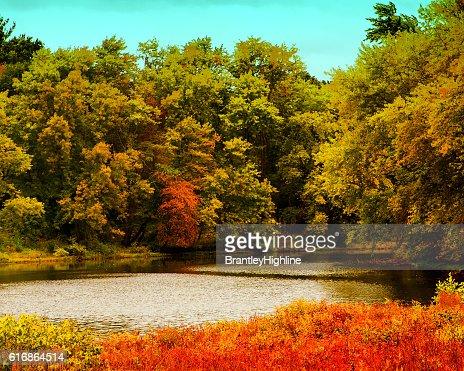 New England Fall Foliage : Stock Photo