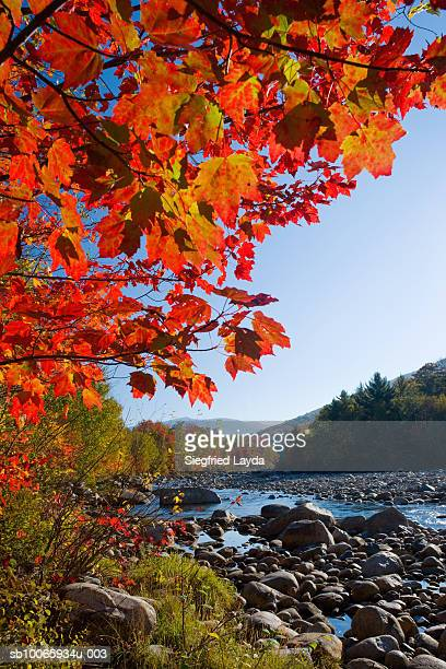 USA, New England, New Hampshire, Kancamagus Highway, Pemigewasset river and trees in autumn, Kancamagus Highway, New Hampshire, England, October 2007