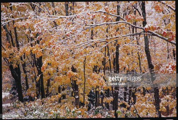 New England Trees in Autumn
