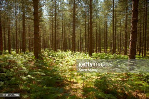 New Forest 11 : Stock Photo
