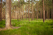 New Forest 9