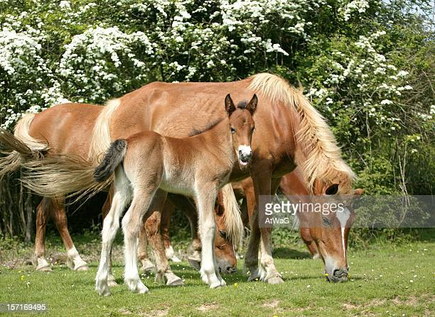 New Forest family